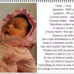 Jurnalul mamei despre bebe – o lună